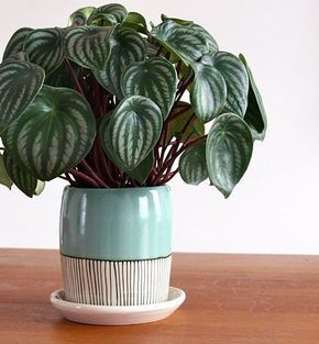 Vaso de planta decorado.