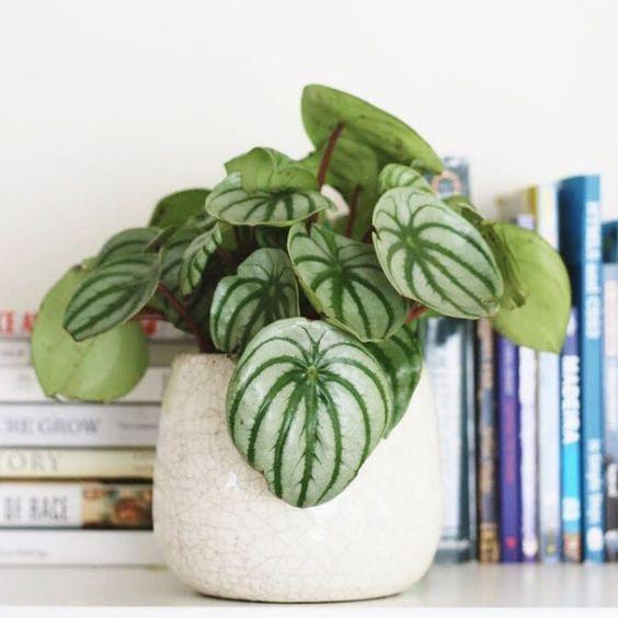 Pequeno vaso de plantas na frente dos livros.