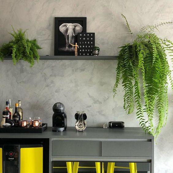 Cozinha com vaso de samambaia na prateleira e outras espécies de plantas para dentro de casa.