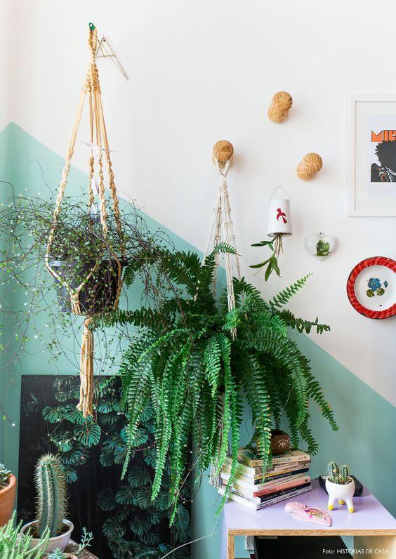 Espaço com várias espécies de plantas para dentro de casa.