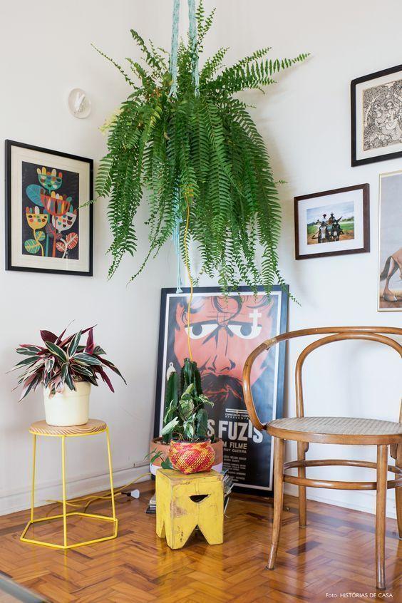 Samambaia suspensa em meio aos quadros e outras plantas para dentro de casa.