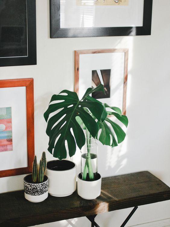 Prateleira com plantas para dentro de casa.