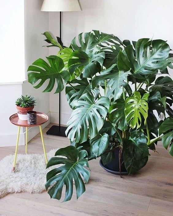 Sala com plantas para dentro de casa em vasos grande e pequeno.