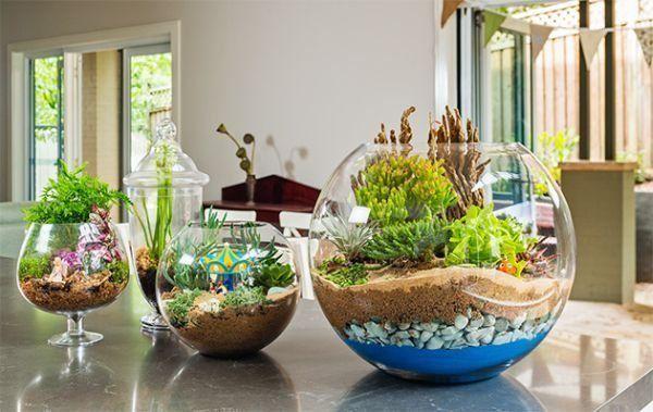 Terrário aberto em aquário e taça.