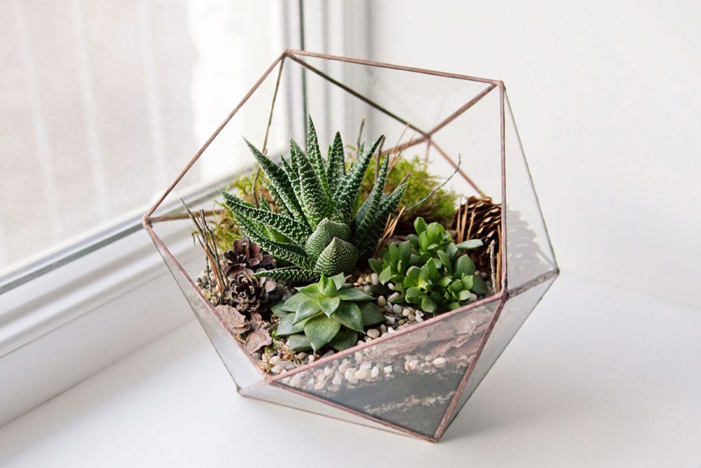 Mini jardim no vaso de vidro geométrico.