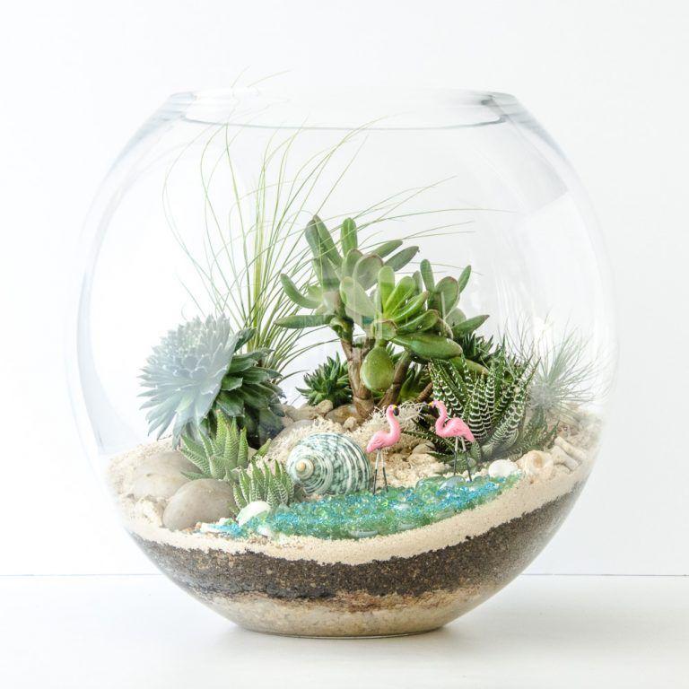 Terrário em aquário aberto com suculentas.