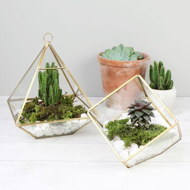 Miniterrário no vidro com formato geométrico.