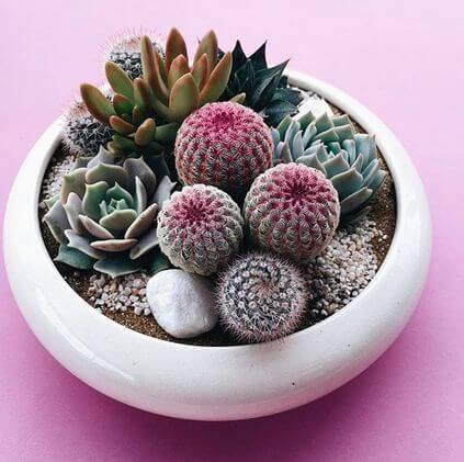 Jardim no vaso de cerâmica com cactos e suculentas.