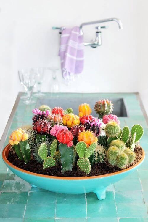 Jardim de cactos no vaso de cerâmica.