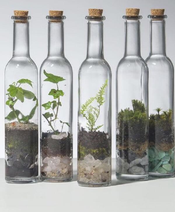 Terrário fechado na garrafa de vidro.