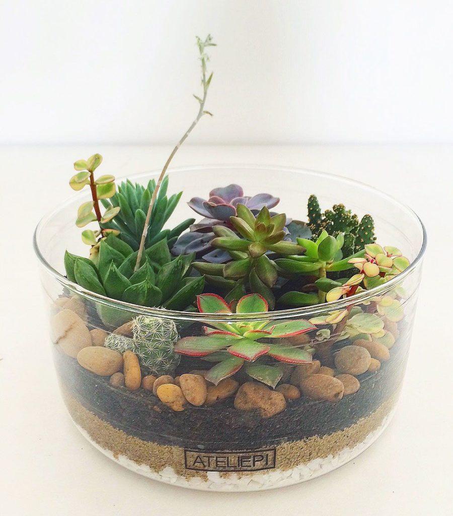Jardim de suculentas no vaso de vidro aberto.