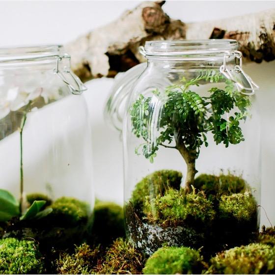 Terrário  com bonsai.