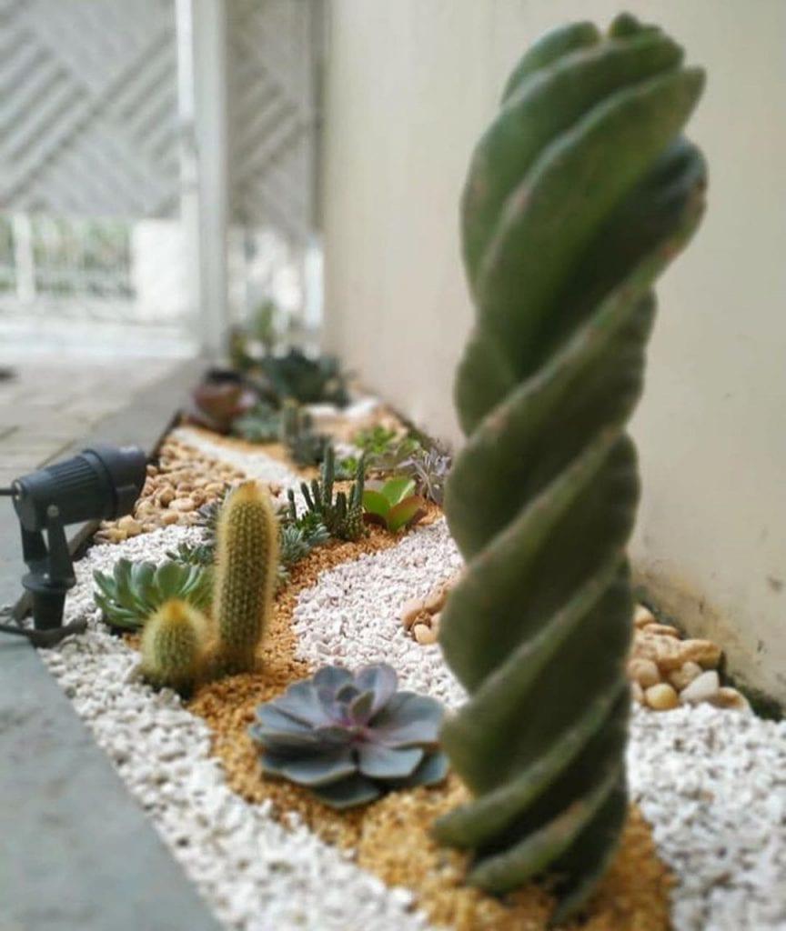 Jardim com pedras, cactos e suculentas.
