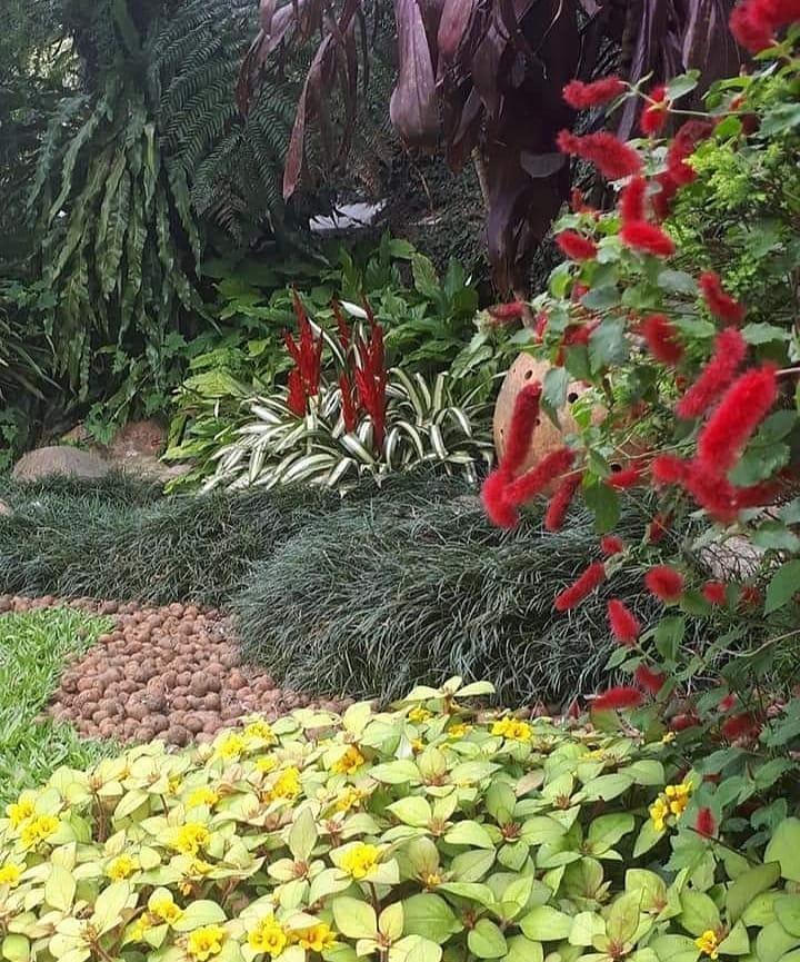 Jardim tropical.