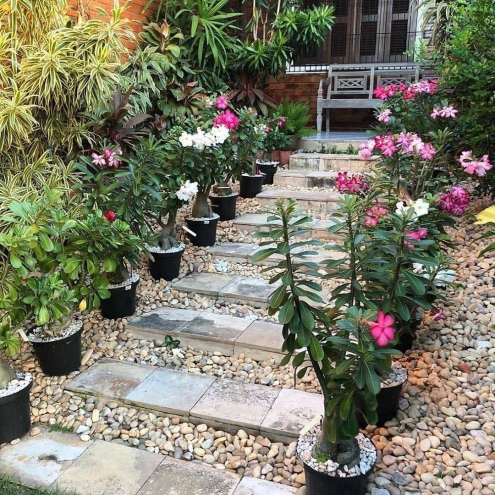 Jardim com pedras e escada.
