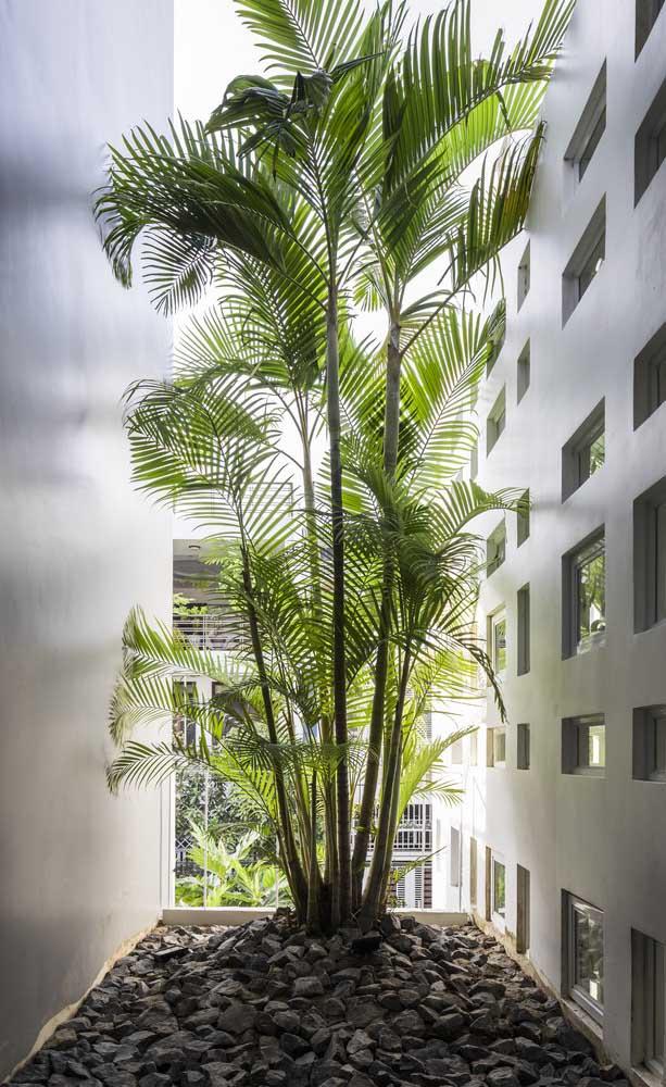 Área lateral decorada com palmeiras e brita.