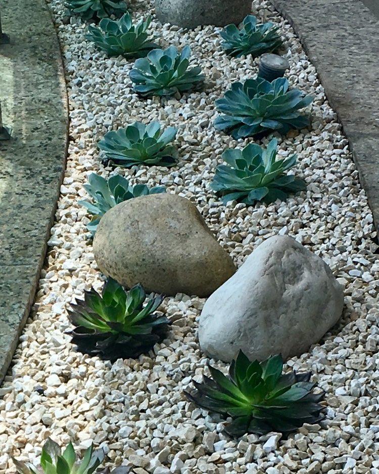 Área pequena com pedras portuguesas e suculentas.