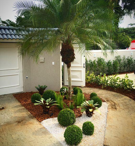Jardim triangular com uma planta alta.