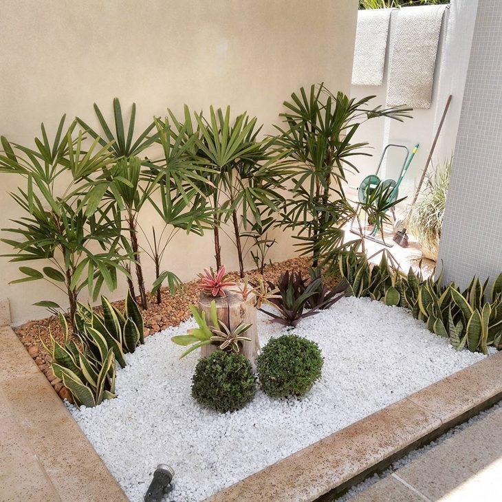 Jardim com plantas médias.