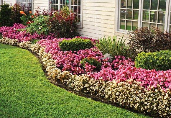 Jardim com flores ao redor da casa.
