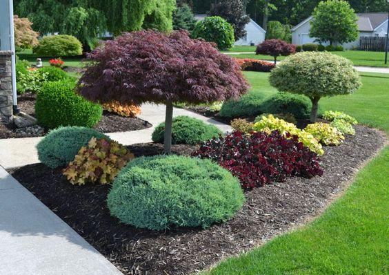 Grande área verde com pequenos arbustos.