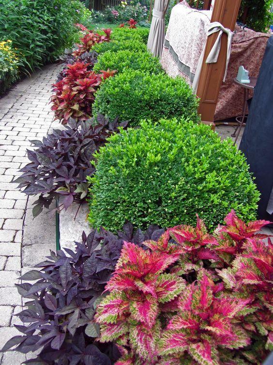 Jardim com plantas verdes, roxas e vermelhas.