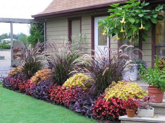 Plantas para jardim de várias cores.