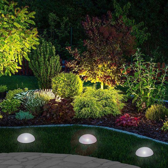 Plantas para jardim iluminado.