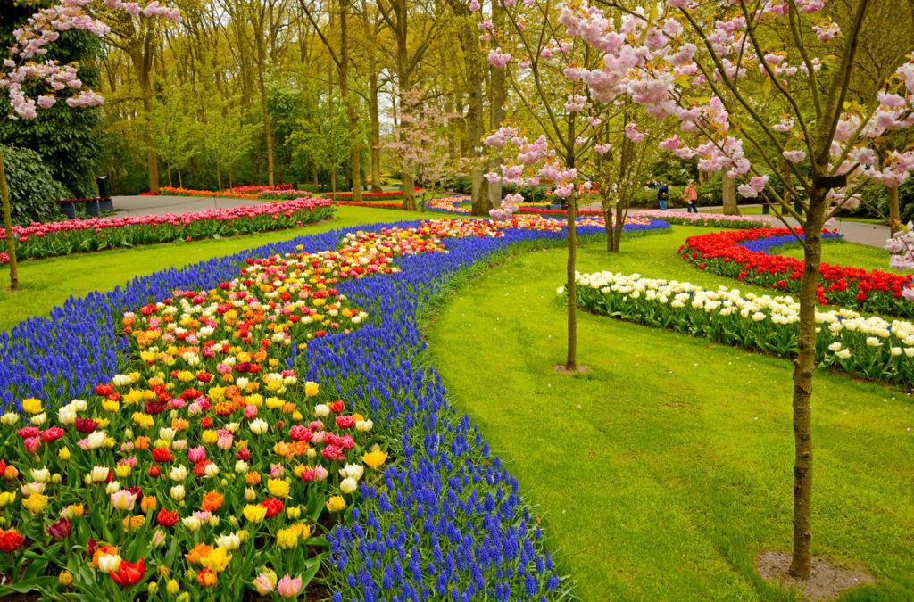 Grande jardim florido.