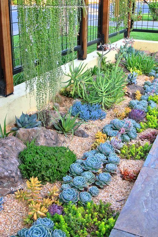 Jardim com várias espécies de plantas suculentas.