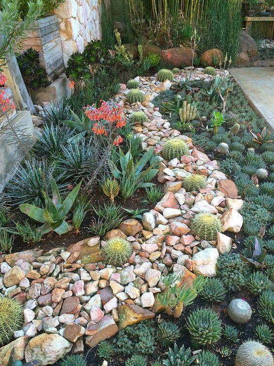 Jardim com plantas baixas.