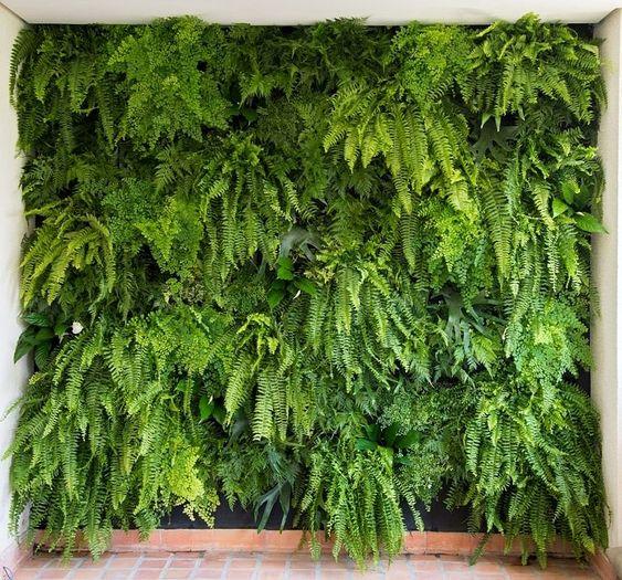 Plantas para jardim vertical de várias espécies.