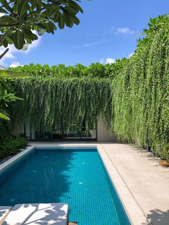 Muro com plantas caídas.
