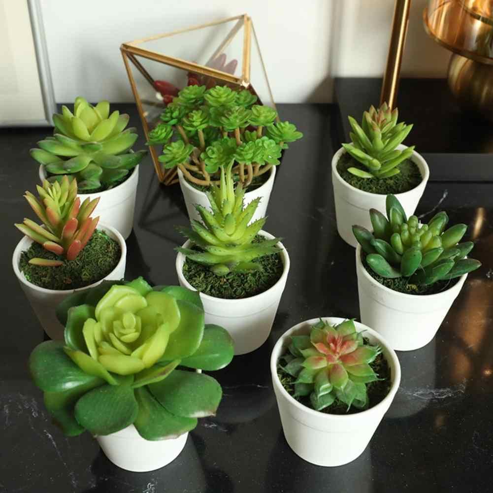 Como plantar suculentas: vasos pequenos.