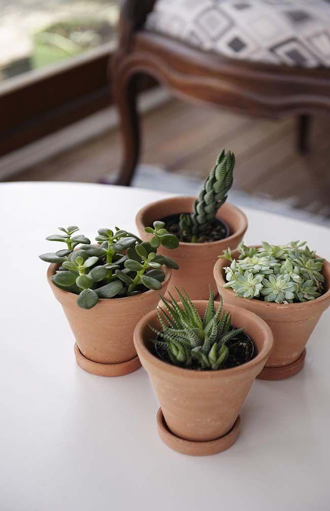 Como plantar suculentas: diferentes vasos de barro.