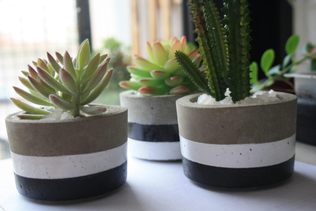 Como plantar suculentas: vasos de cimento.