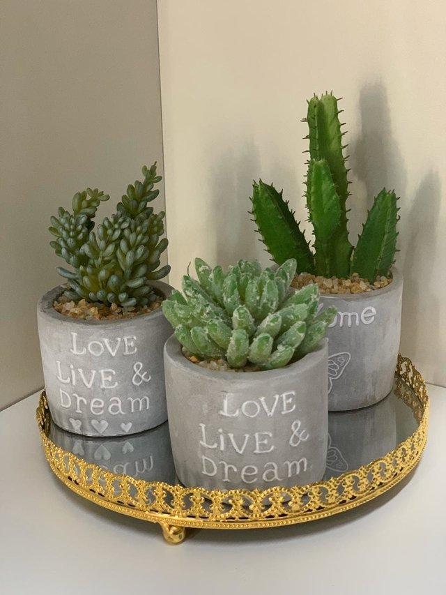 Como plantar suculentas: vasos de cimento decorados.
