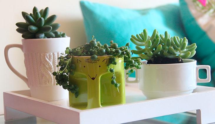 Plantas na xícara.