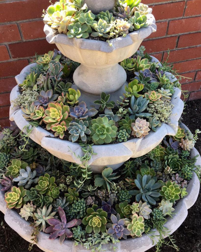 Plantas na fonte.