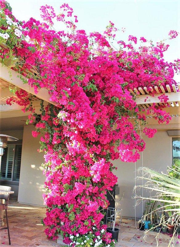 Flores que gostam de sol: primavera