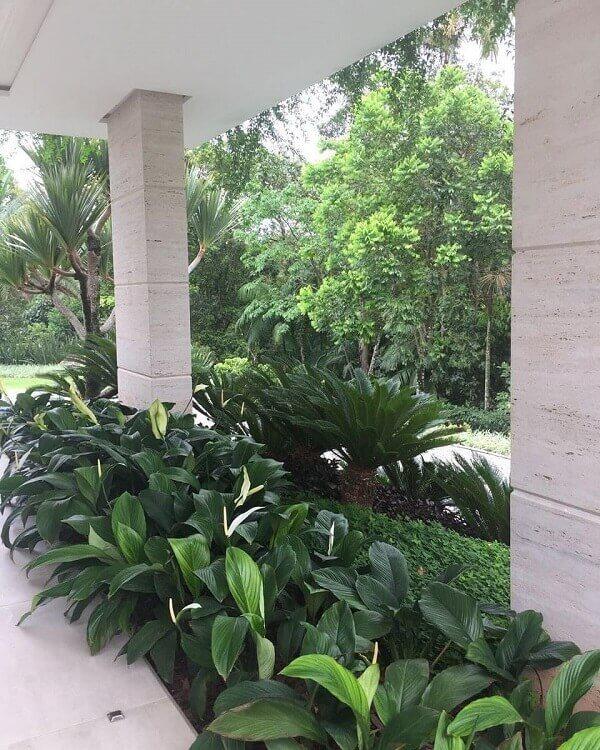 Jardim coberto de lírio da paz.