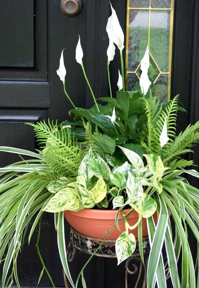 Vaso com lírio da paz e outras plantas.