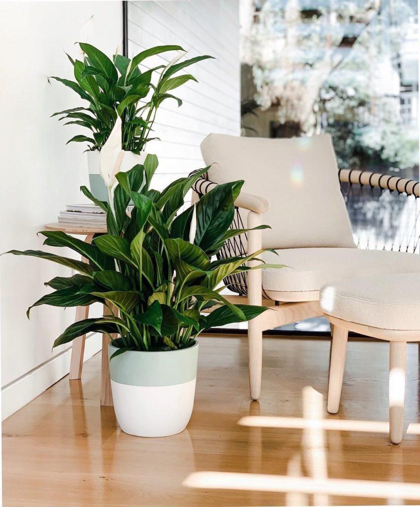 Vasos decorados com plantas na área externa da casa.