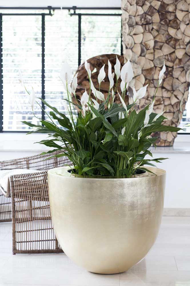 Vaso de cimento dourado com lírio da paz.