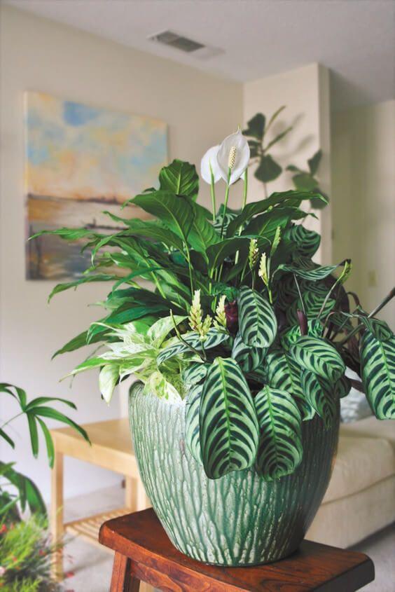 Vaso verde moderno com várias espécies de planta.