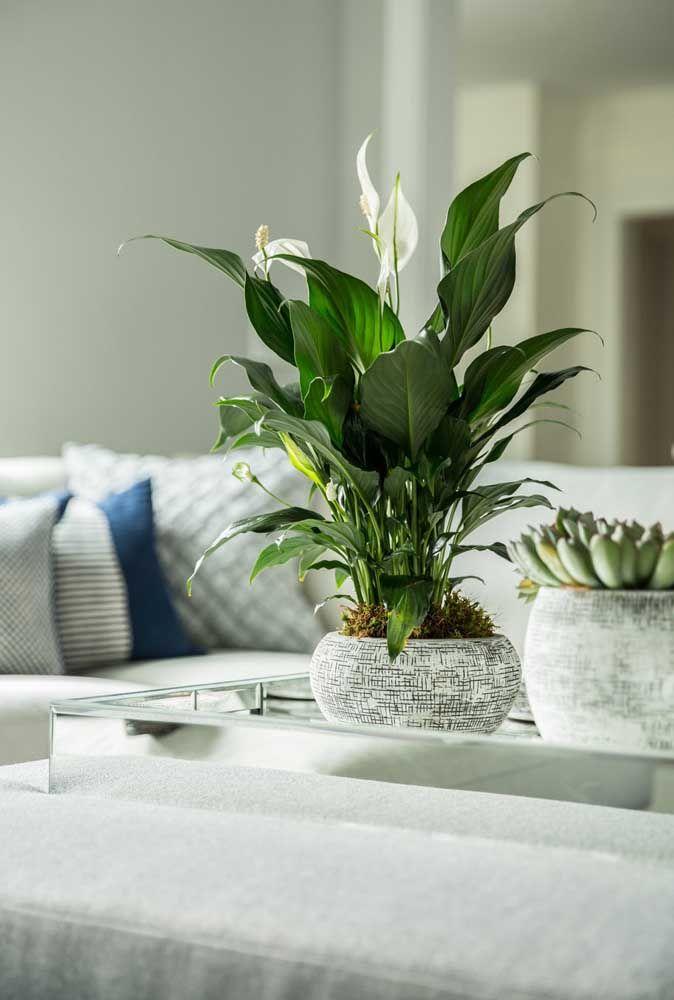 Sala com vasos de plantas na mesa central.