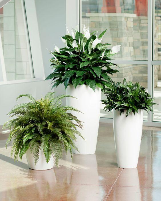 Vasos modernos altos e brancos com plantas.