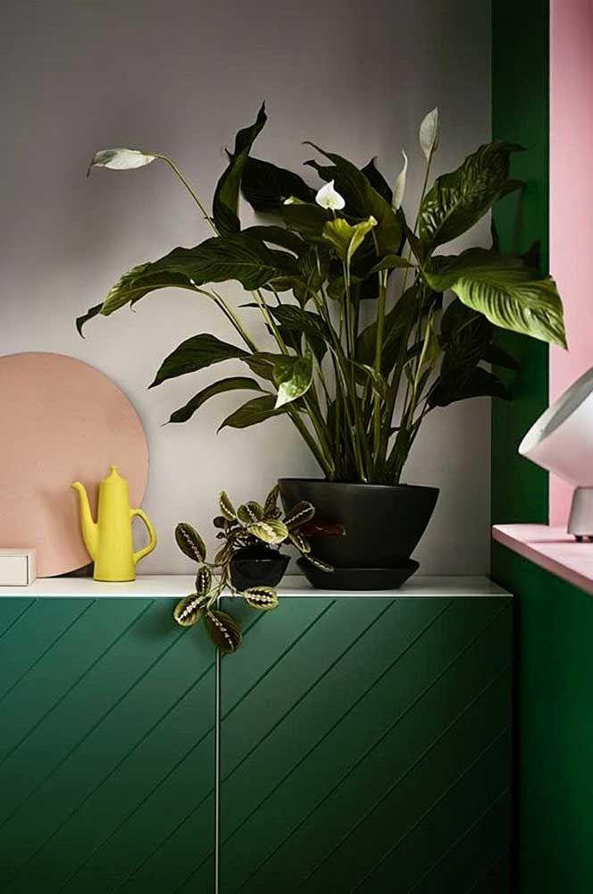 Cozinha colorida decorada com plantas.