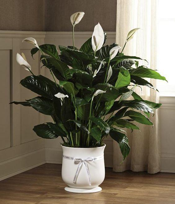 Vaso branco decorado com fita.