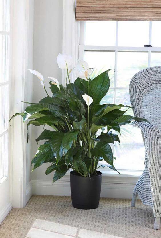 Sala decorada com vaso preto com planta.